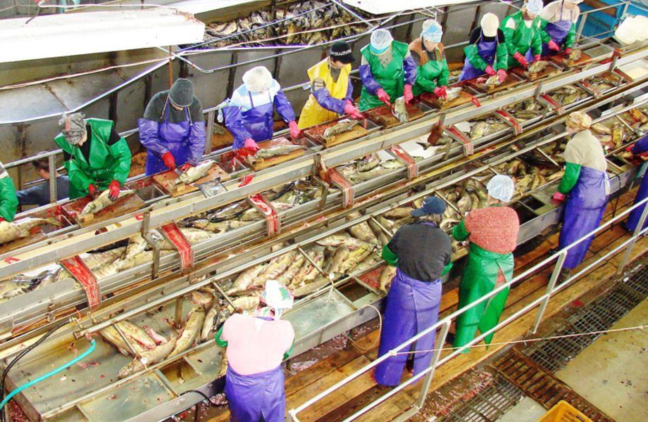 Рыбоперерабатывающий комбинат (9 лет работы)