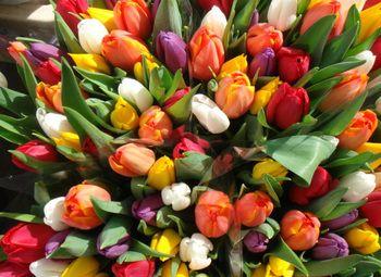 Сезонный бизнес по продаже тюльпанов