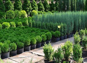Питомник растений и Ландшафтная Компания